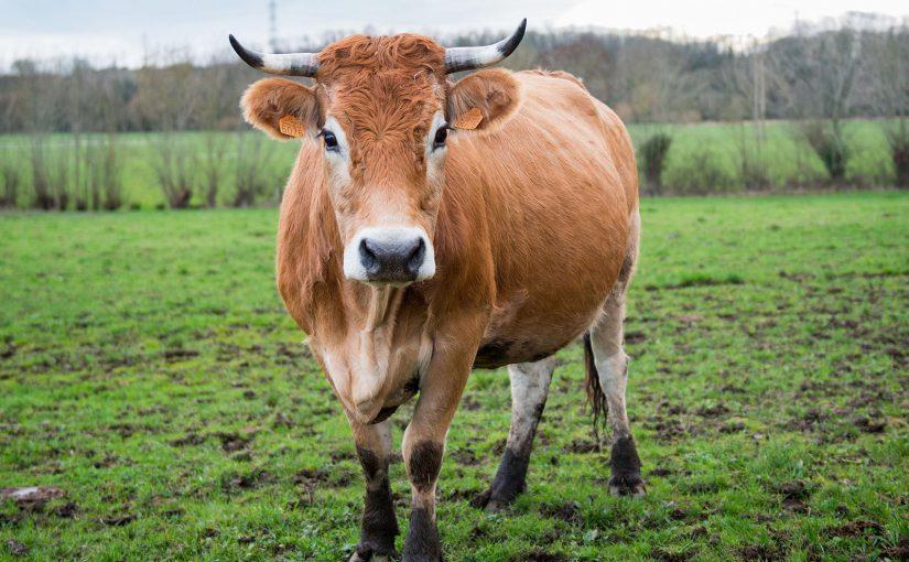 Carte blanche <br/>à la Fête de la vache nantaise <br/>et à l'alliance des cuisiniers Slow Food